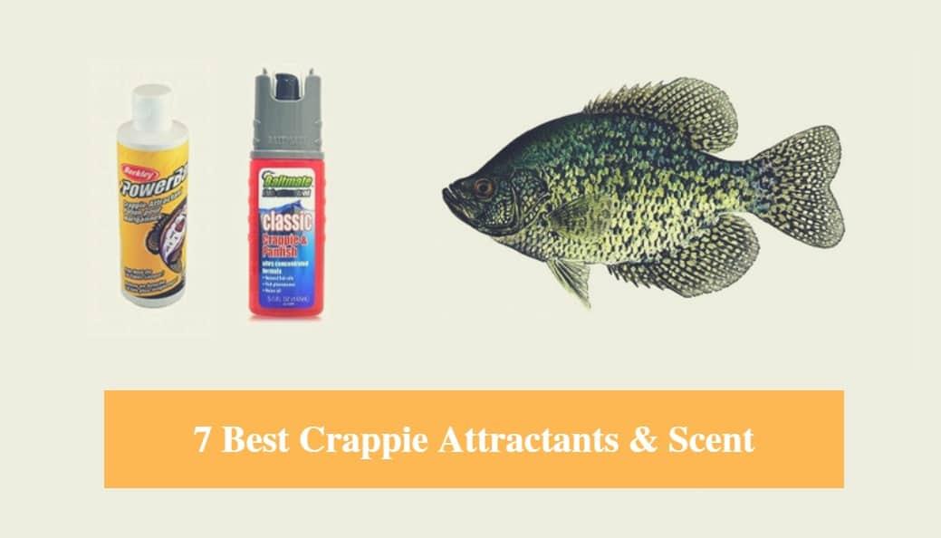 Best Crappie Attractants & Crappie Scent