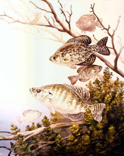Will Crappie Spawn In Deep Water