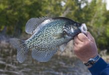 Why Do Crappie Change Color