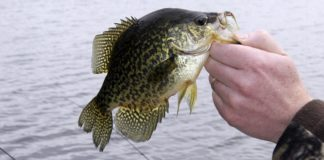 Why Do Crappie Suspend