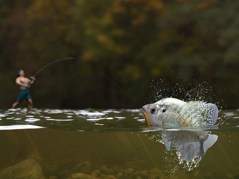 Why Is Crappie Fishing So Popular
