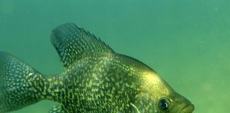 Are Crappie Color Blind