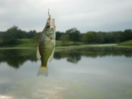 Where do Crappie Live and Like to Hide?