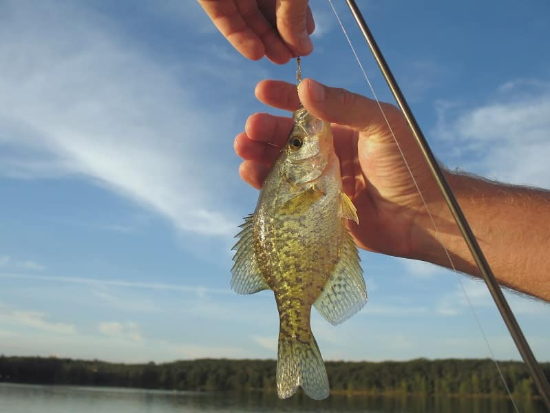 Where do Crappie go in the Winter and Summer?