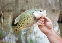 Will Crappie Survive and Reproduce in a Pond?