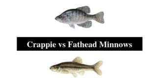 Crappie vs Fathead Minnows
