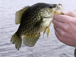 Crappie Dock Fishing