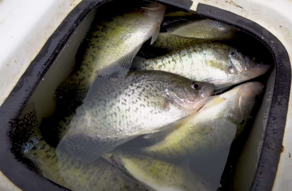 Barometric Pressure and Crappie Fishing