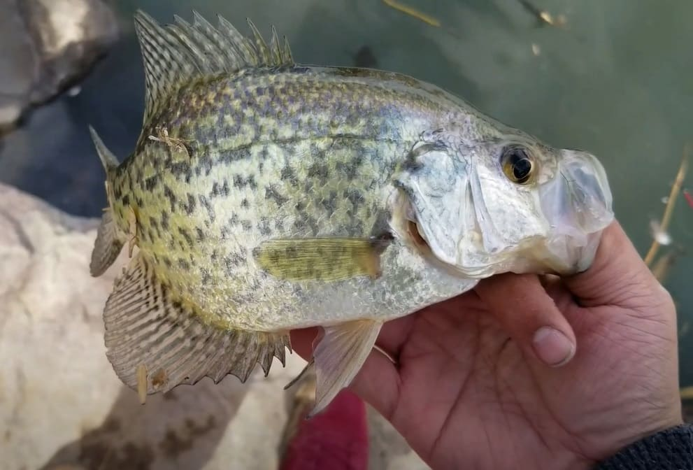 Colorado Crappie Fishing Tips